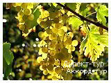 День 5 - Львов - Мишкольц-Тапольце - Токай