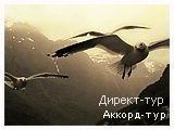 День 4 - Согнефьорд - Сталхейм